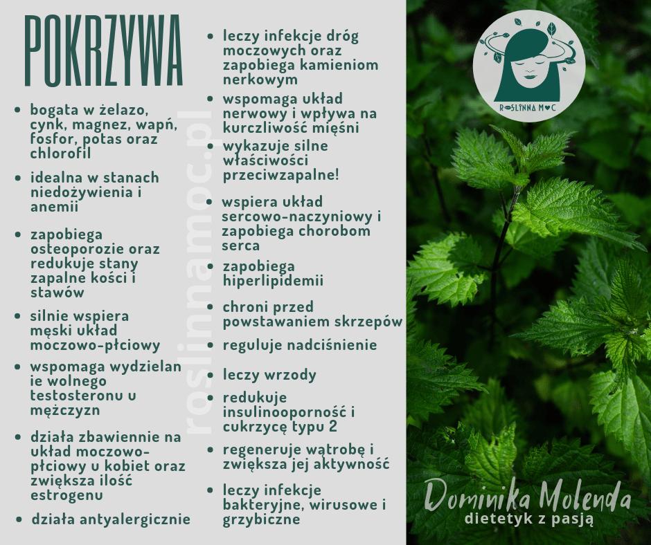 pokrzywa właściwości roslinnamoc.pl